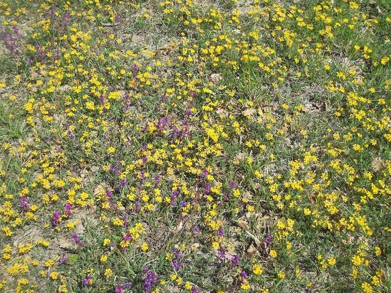 Priroda u mome kraju (drugi dio teme) Dscn2957