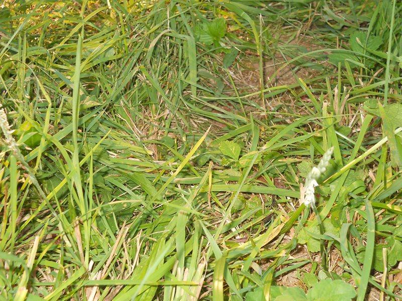 Priroda u mome kraju (drugi dio teme) - Page 3 Dscn3267