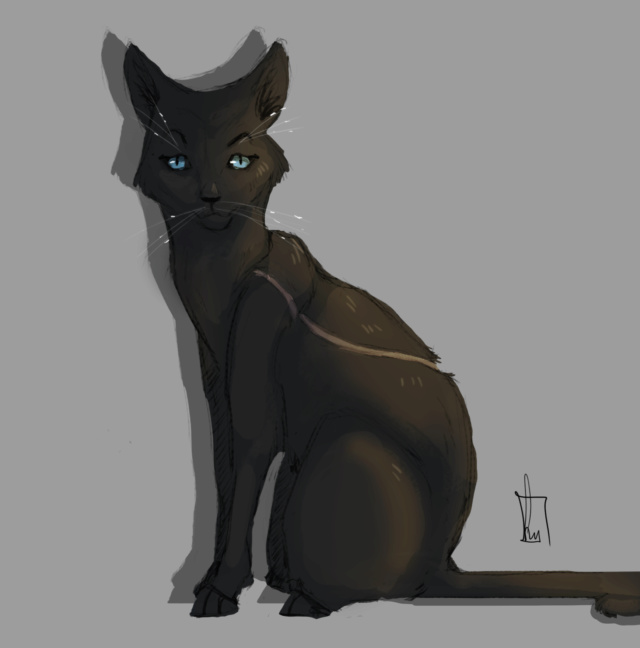 Thunderclan kitties (leeftijden) - Pagina 2 Swallo10