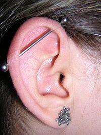 Oreille - Cartilage,Tragus 200px-10