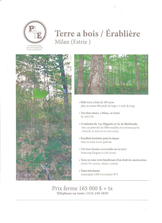 Lot a bois érablière a vendre en Estrie Milan10