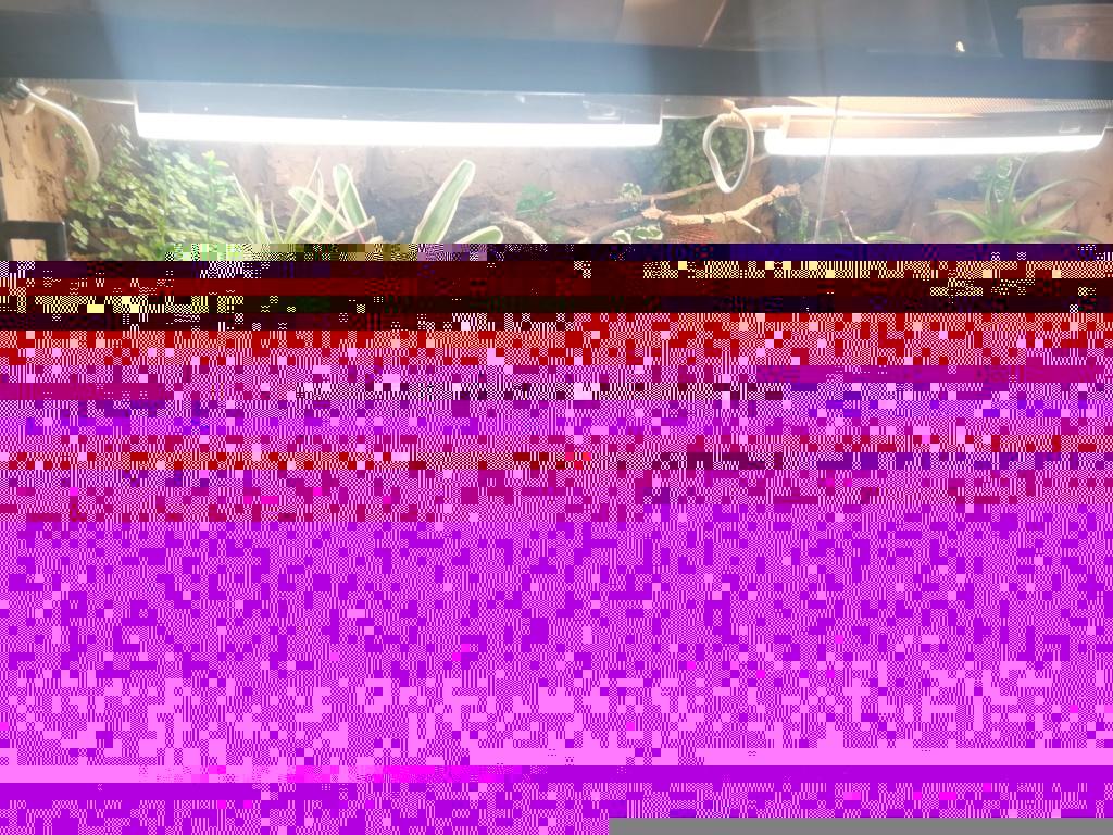 Réaménagement terrarium à dendrobates Img_2012