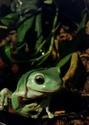 amphibian world - Portail 20180110