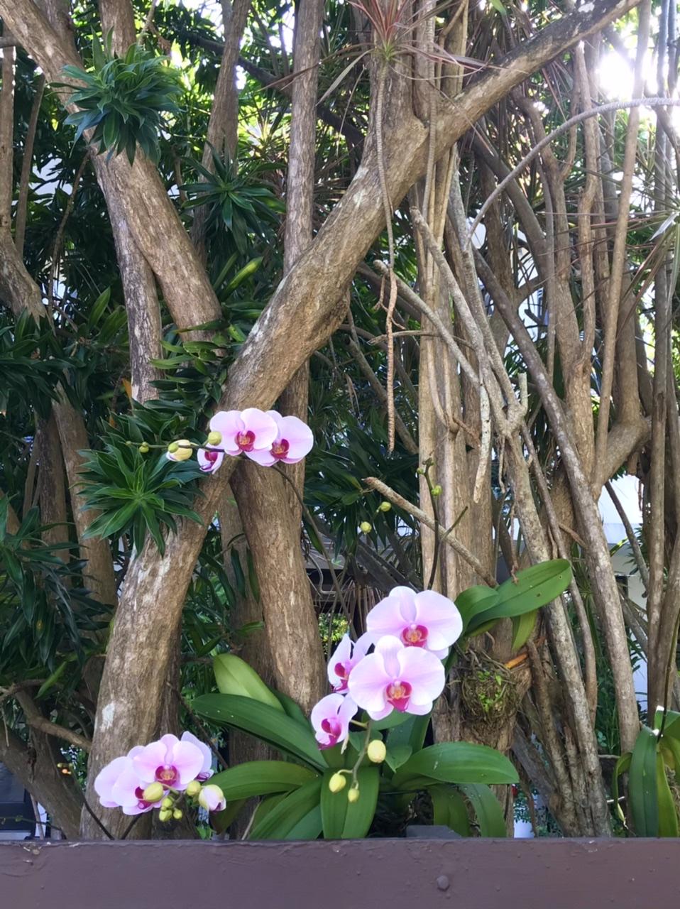 Vos plantes, fleurs, jardin !  - Page 26 6c3a2e10