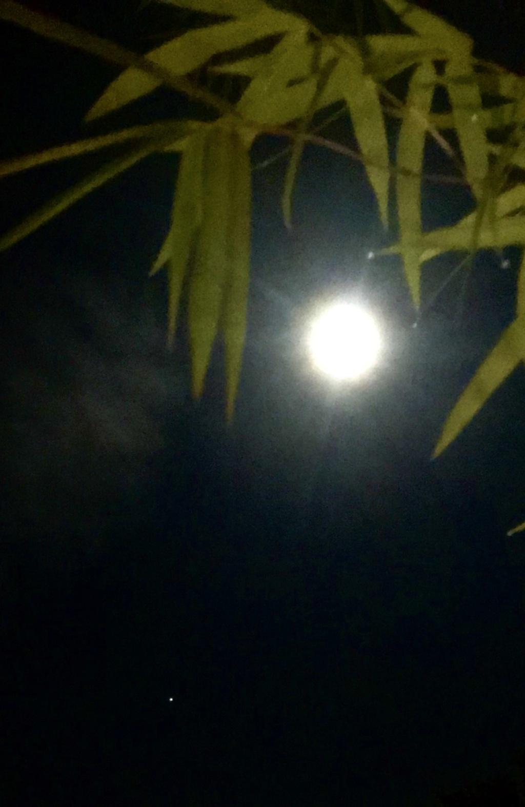 Pleine Lune 1 Octobre - Page 2 Fdf3ae10