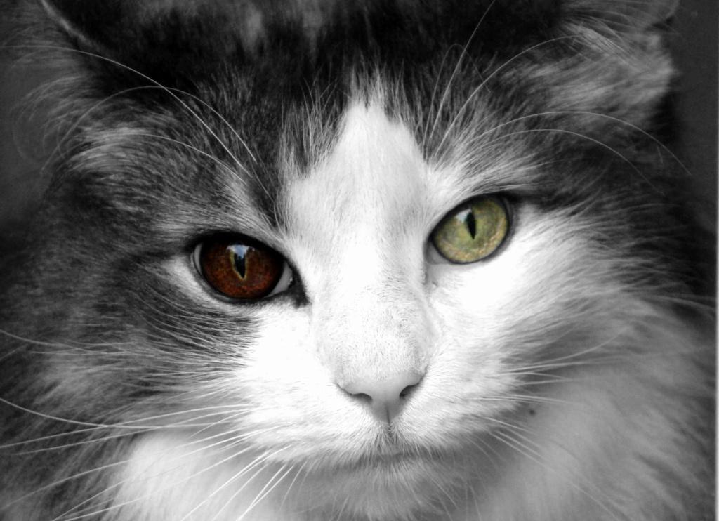 Mascotas, animales, bichos... que tanto nos gustan! 21494510