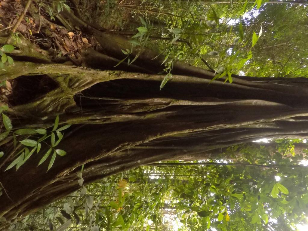 Ainka va au bagne en Guyane Gopr2811