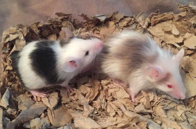 Got 2 new babies! 15241710