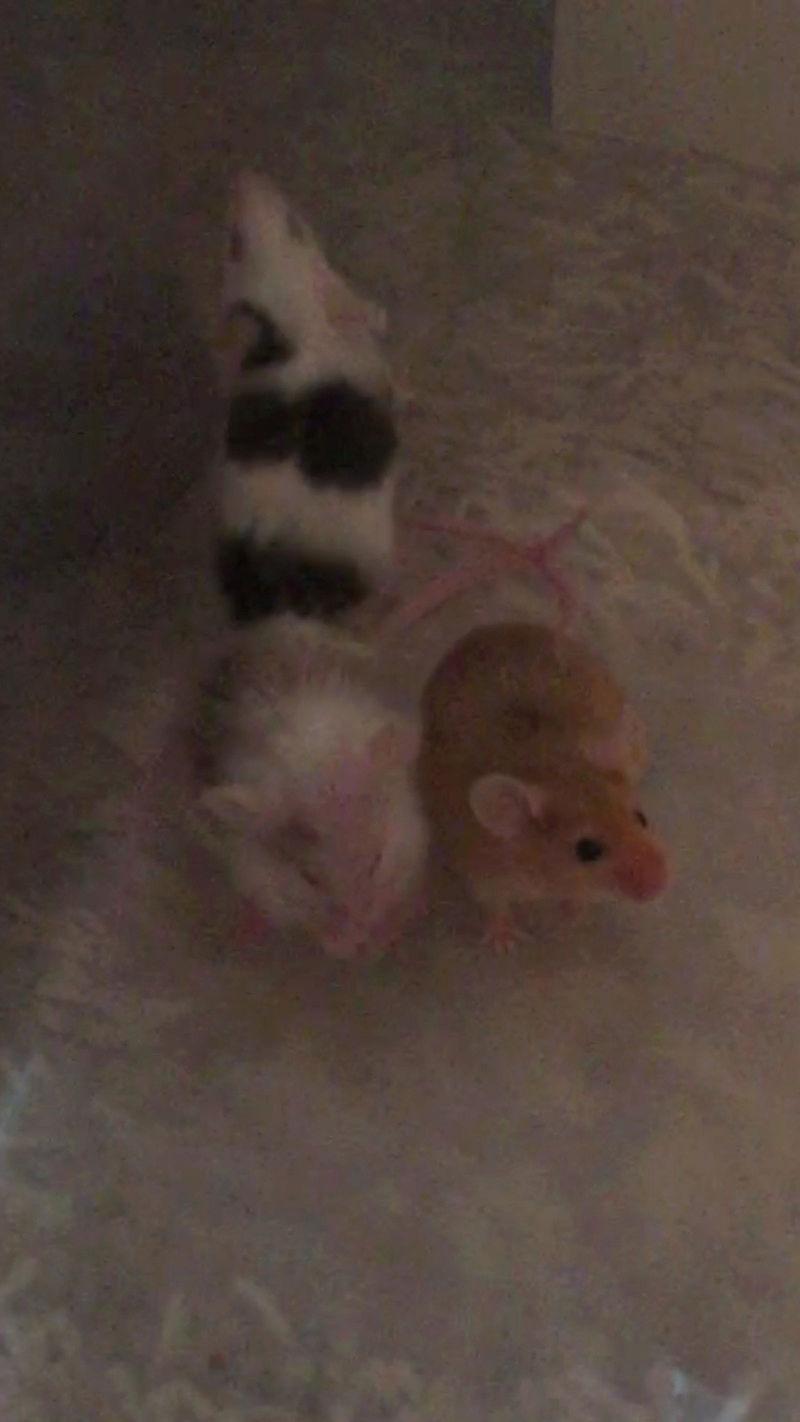 Got 2 new babies! 15241713