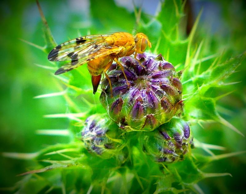 Insecte ou extra-terrestre ?  P1160911