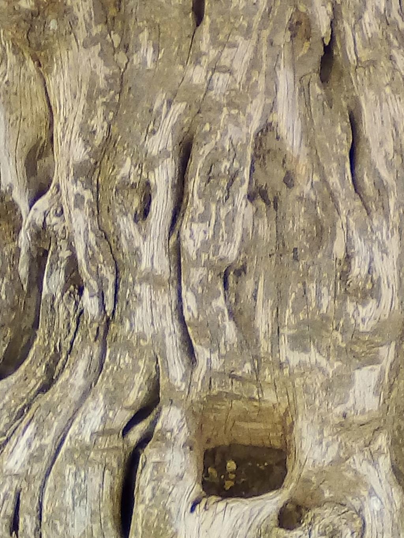 الاشجار التكنيزية Img_2101