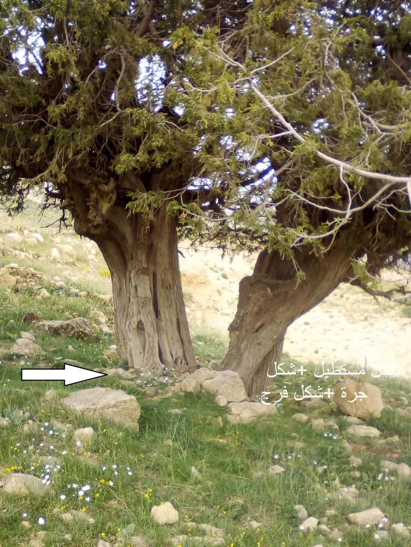 الاشجار التكنيزية Img_2104
