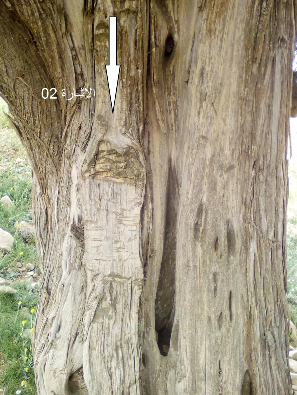 الاشجار التكنيزية Img_2105