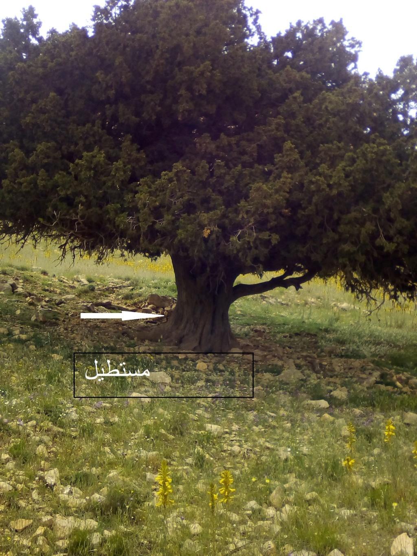 الاشجار التكنيزية Img_2106