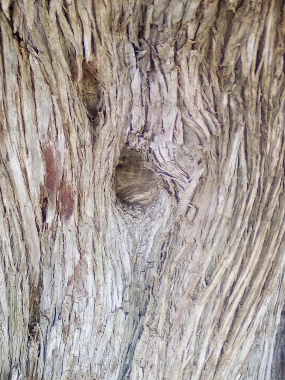 الاشجار التكنيزية Img_2125