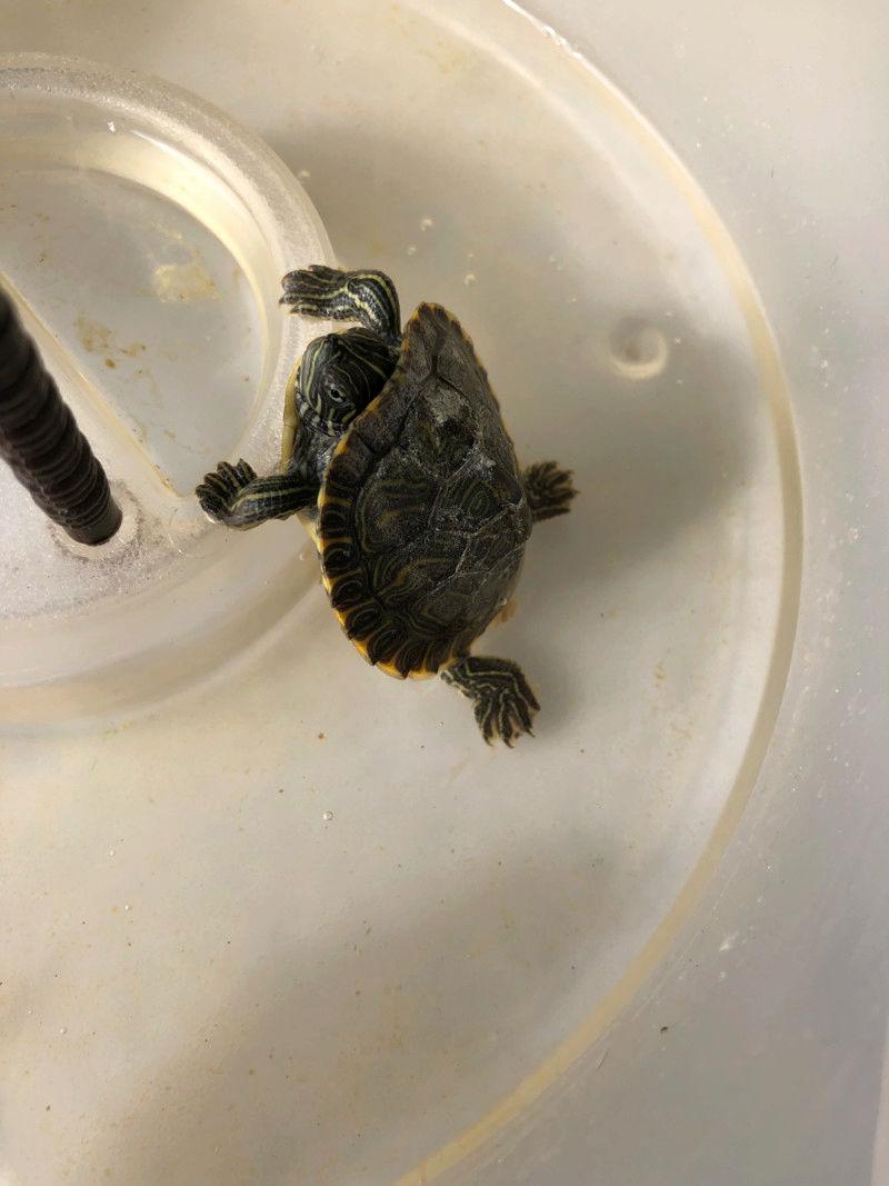 Especie e Cuidados a ter com tartaruga 15283910