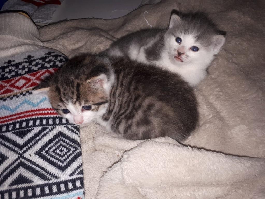 bientot mes deux  chatons - Page 4 20190413