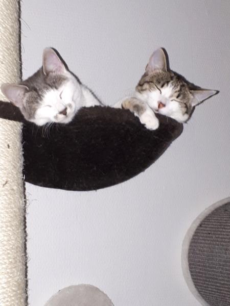 bientot mes deux  chatons - Page 4 20190911