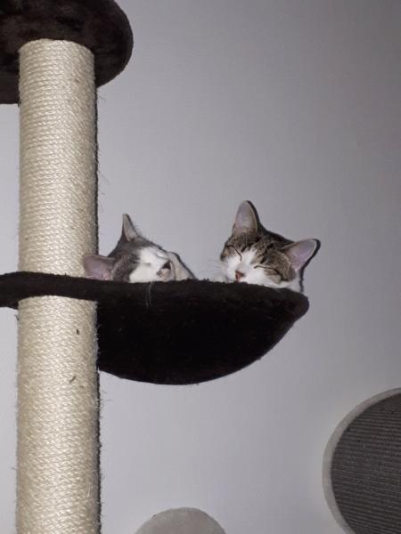 bientot mes deux  chatons - Page 4 20190912