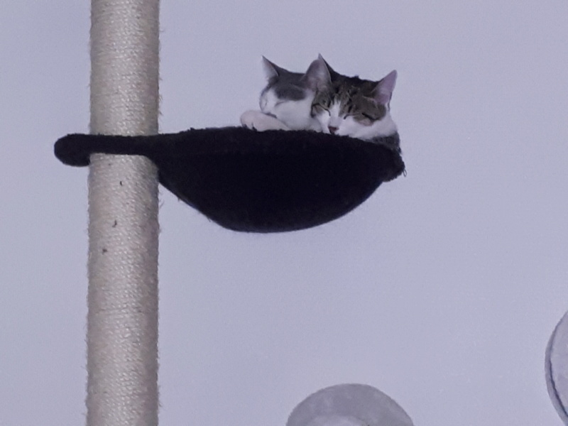 bientot mes deux  chatons - Page 4 20190913