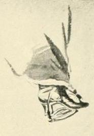 Les souliers et chaussures de Marie-Antoinette  - Page 7 Louisa13