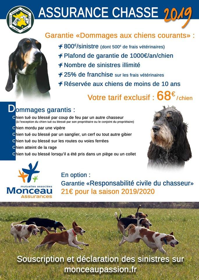 Assurances chiens courants 62239310