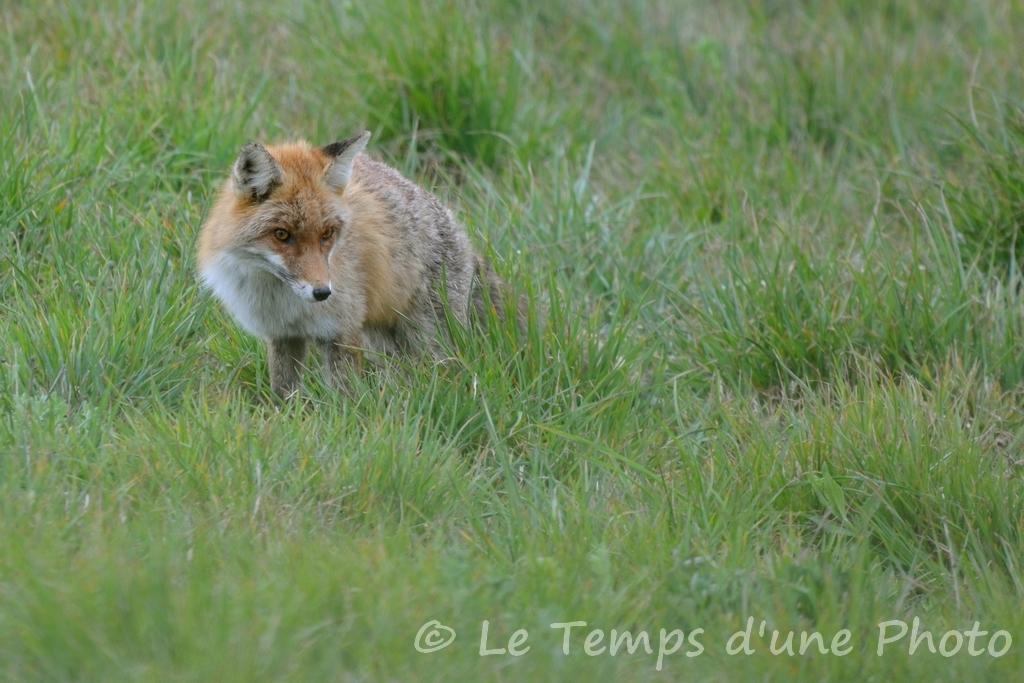 Photographie Animalière - Page 10 Dsc_0027