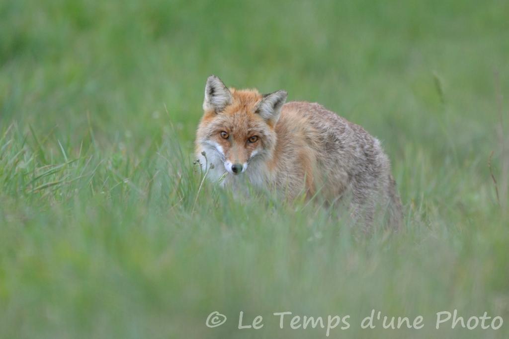 Photographie Animalière - Page 11 Dsc_0030
