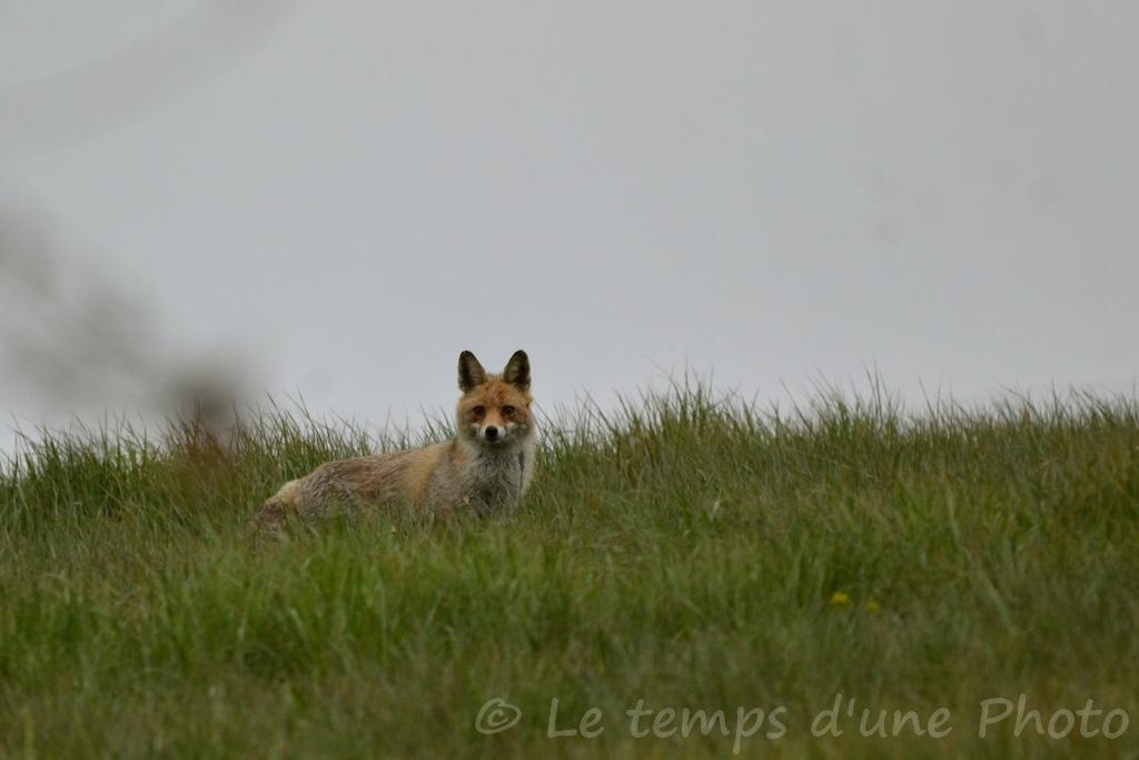 Photographie Animalière - Page 11 Dsc_0041