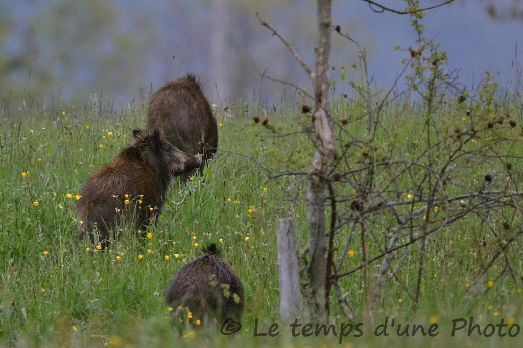 Photographie Animalière - Page 13 Dsc_0053