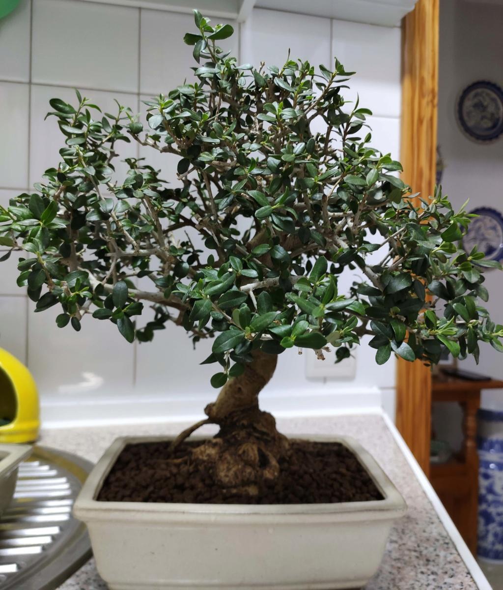 Mis bonsáis Img_2048