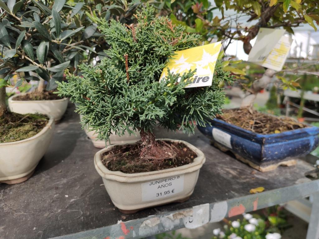 Mis bonsáis Img_2051