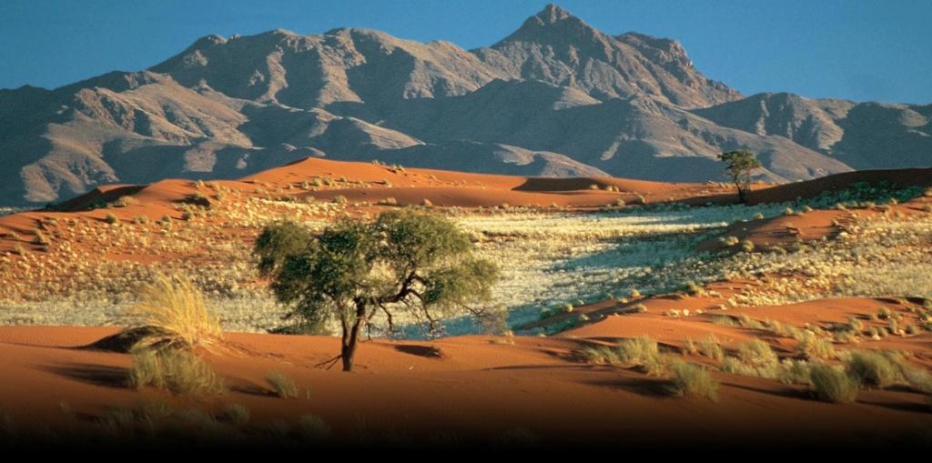 Namibia 10 Dollars 1990 83918010