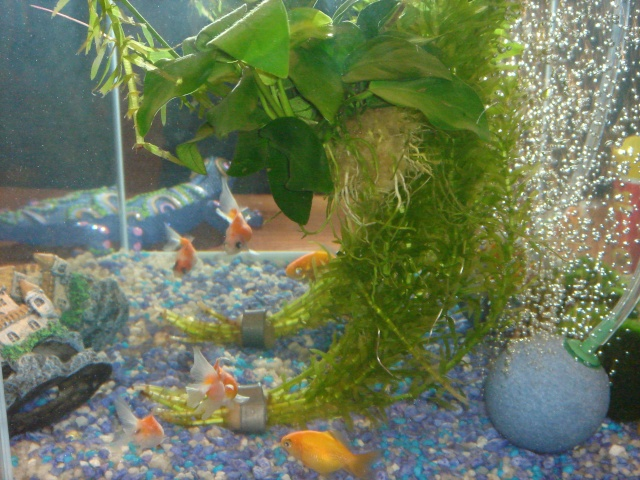 Mon aquarium en cours de création. Dsc03612