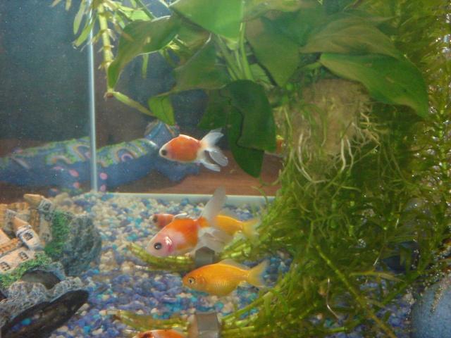 Mon aquarium en cours de création. Dsc03613