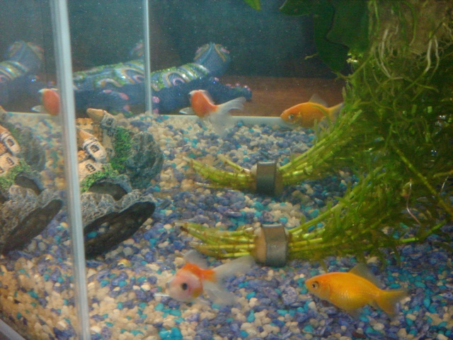 Mon aquarium en cours de création. Dsc03614