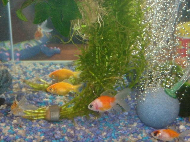 Mon aquarium en cours de création. Dsc03615