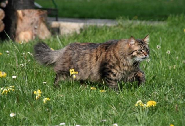 Avis sur un de mes chats ... 42811810