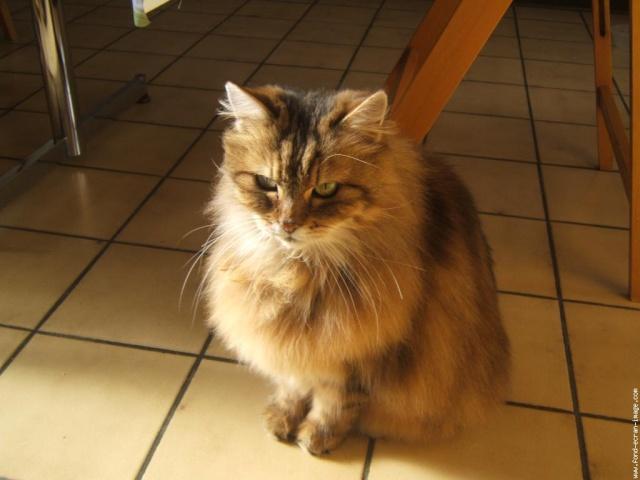 Avis sur un de mes chats ... Galeri10