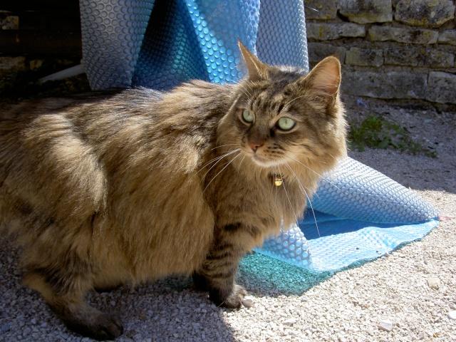 Avis sur un de mes chats ... Pict6515