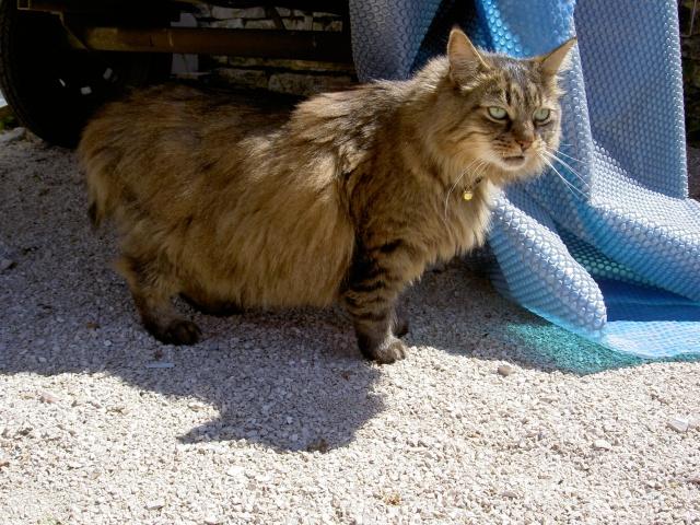 Avis sur un de mes chats ... Pict6516