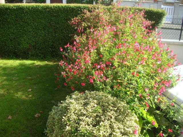 Un Jardin à St Malo juillet 2007 Dscn7162