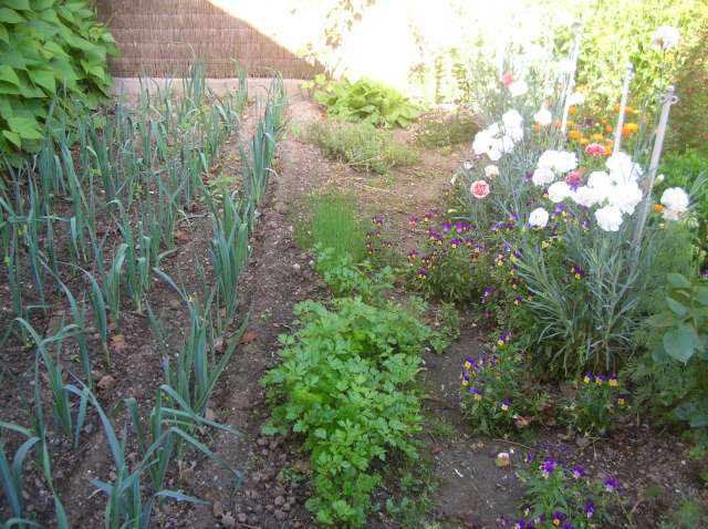 Un Jardin à St Malo juillet 2007 Dscn7163