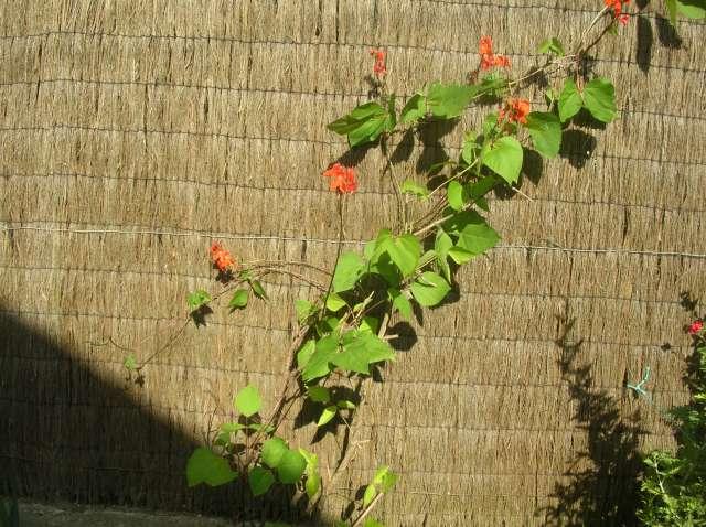 Un Jardin à St Malo juillet 2007 Dscn7164