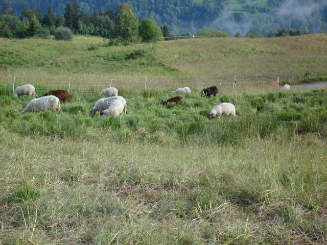 À la découverte des villages de Montvalezan Dsc01923