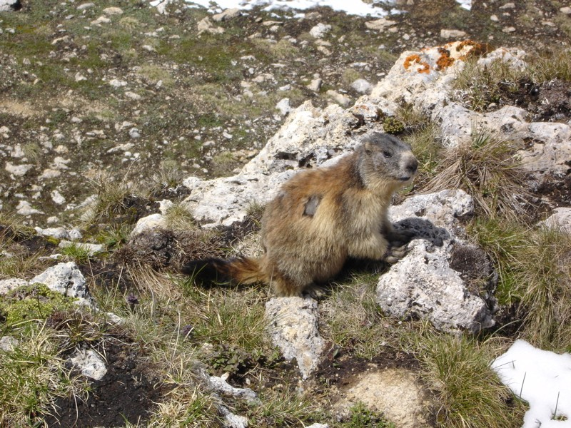 La faune en Haute-Tarentaise Dsc02033