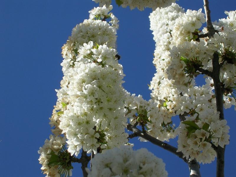 Quelques floraisons de mon jardin - Page 2 Dscn4212