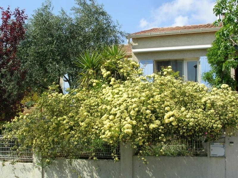 Quelques floraisons de mon jardin Dscn4312
