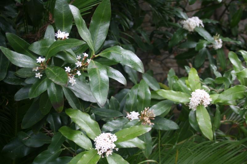 Quelques fleurs en ce mois de juin Acokan10