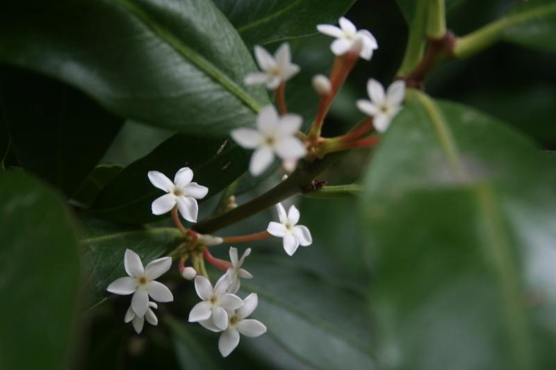 Quelques fleurs en ce mois de juin Acokan11